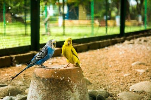 Free stock photo of #birds, bird house