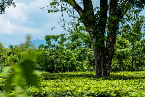 Free stock photo of estate, garden, park, tea