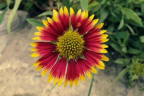 Bahçe, bitki, bulanık arka plan, bulanıklık içeren Ücretsiz stok fotoğraf