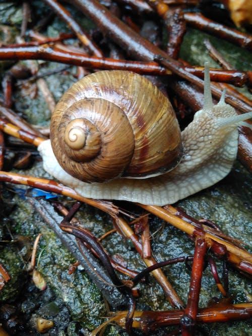 Darmowe zdjęcie z galerii z abstrakcyjne zdjęcie, matka natura, muszla ślimaka