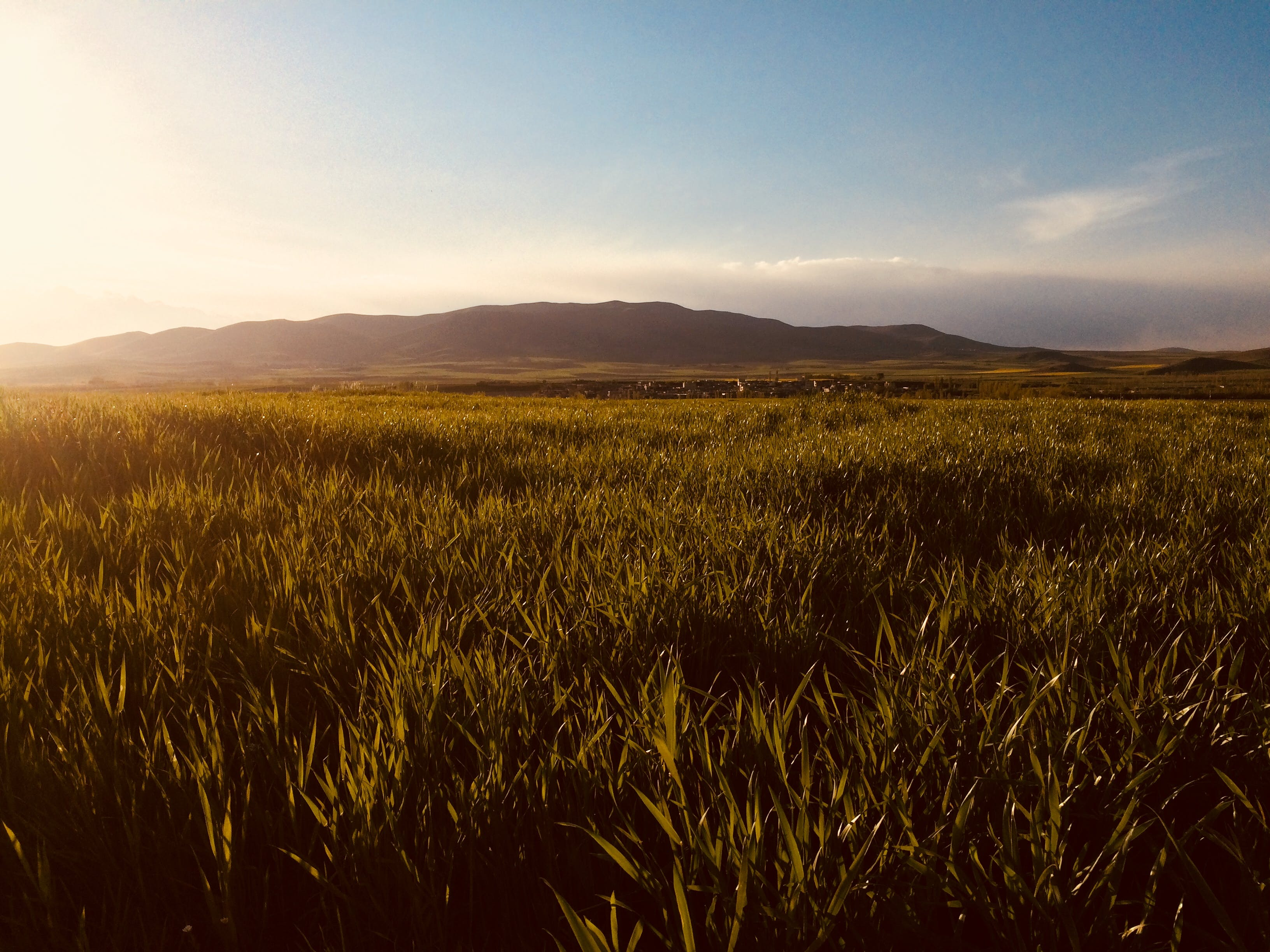 Vast Green Grass Fields With Silhouette of Mountain at Distance