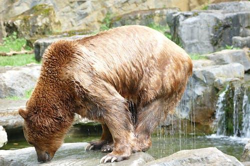 Imagine de stoc gratuită din animal, domaine han, fotografie de animale, parc de animale