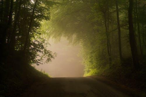 Безкоштовне стокове фото на тему «Денне світло, дерева, дорога, з підсвіткою»