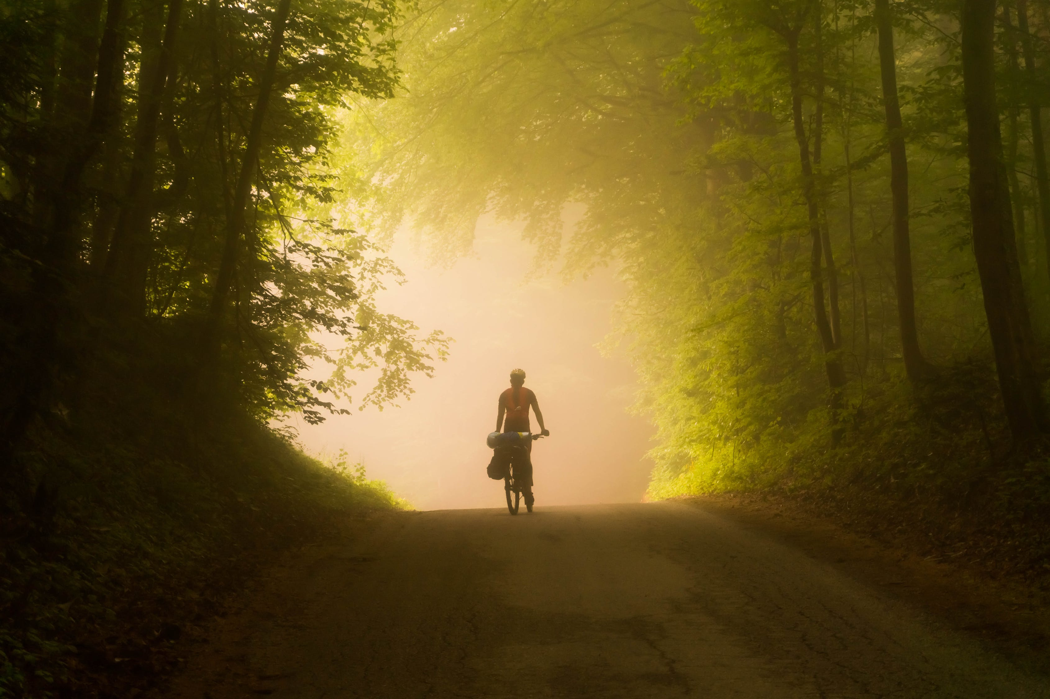 Person Riding Bicycle in the forest
