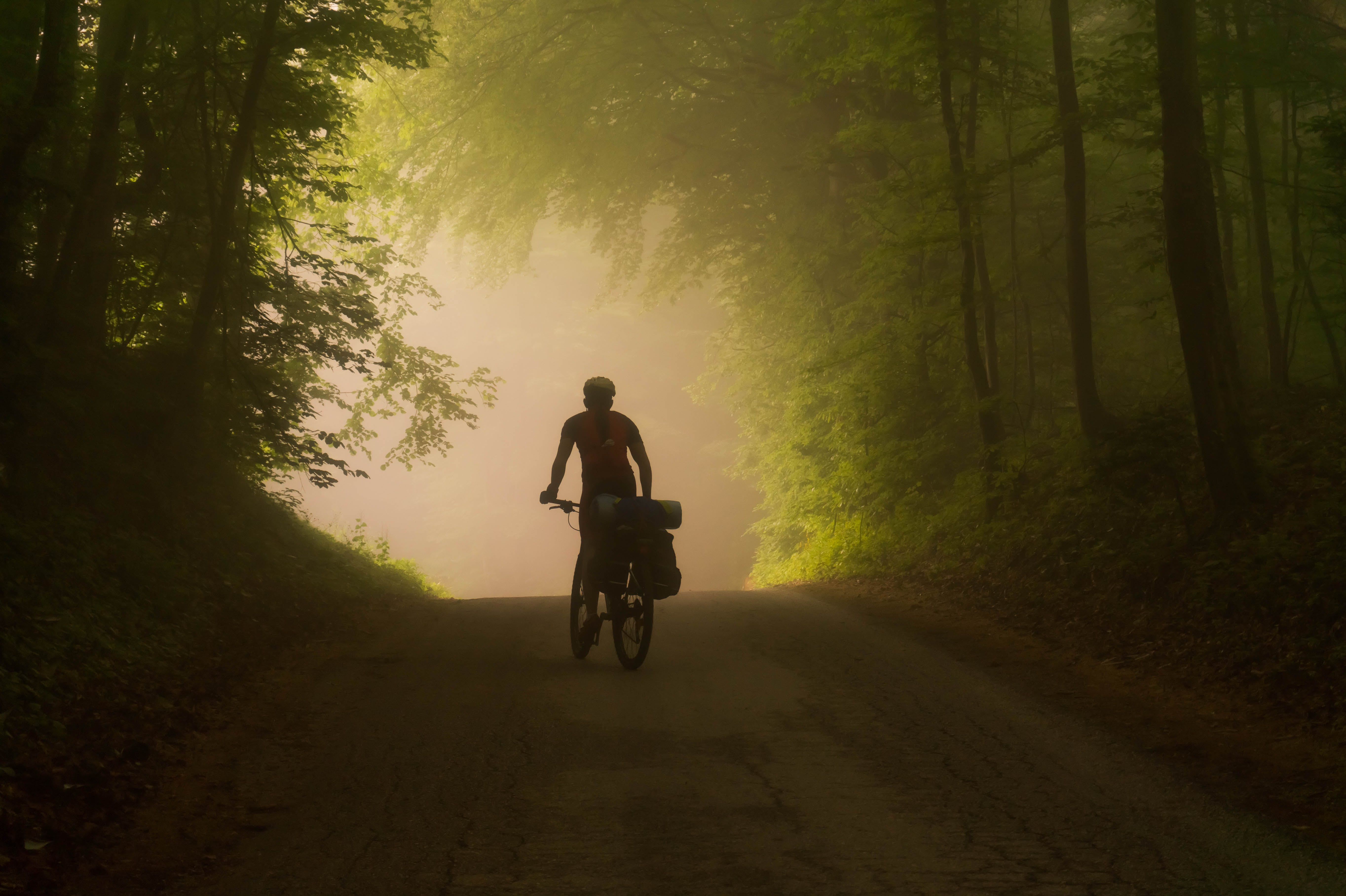 Person Riding on Bicycle Near Trees