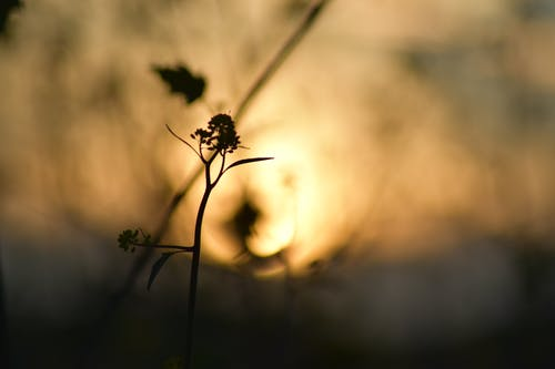 Ảnh lưu trữ miễn phí về lá khô, mặt trời xoáy, môi trường xung quanh