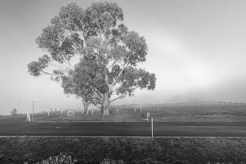 Darmowe zdjęcie z galerii z australia, drewno, droga, drzewa