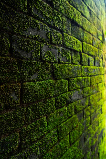 Photography of bricks covered with moss