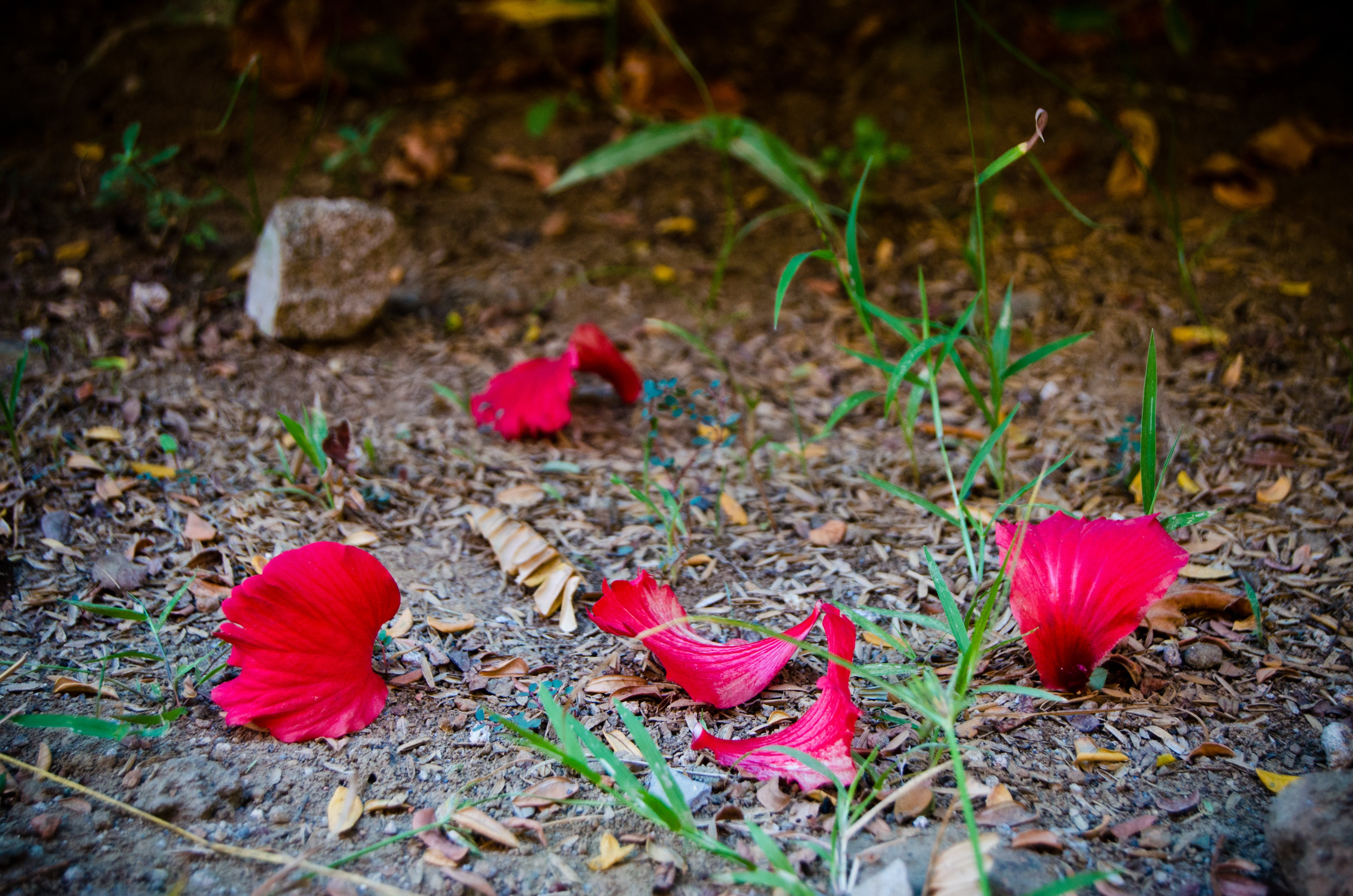 Free stock photo of petals, fall leaves, artificial flowers