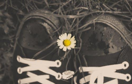Darmowe zdjęcie z galerii z buty, czarno-biały, tapeta hd, tło