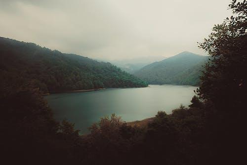 Zdjęcia bez opłat licencyjnych z drzewa, jezioro, krajobraz, las