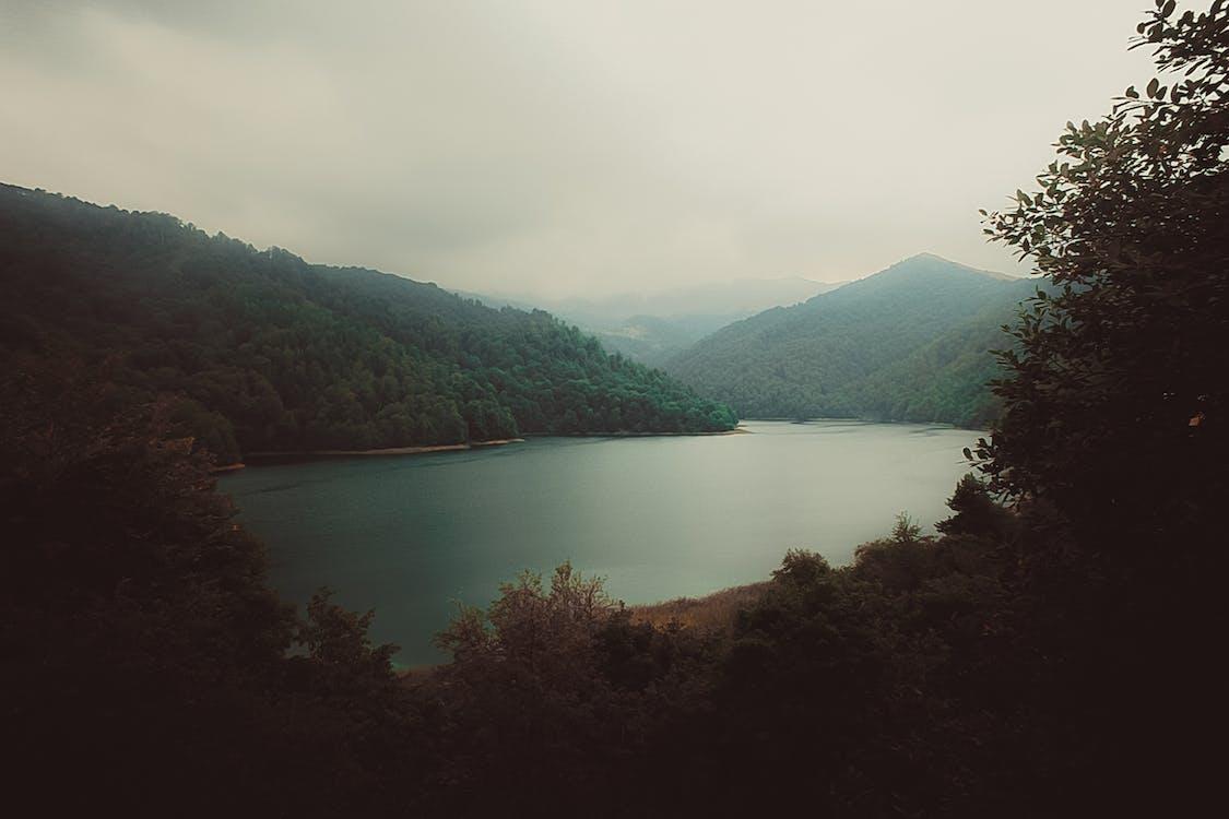 Darmowe zdjęcie z galerii z drzewa, jezioro, krajobraz