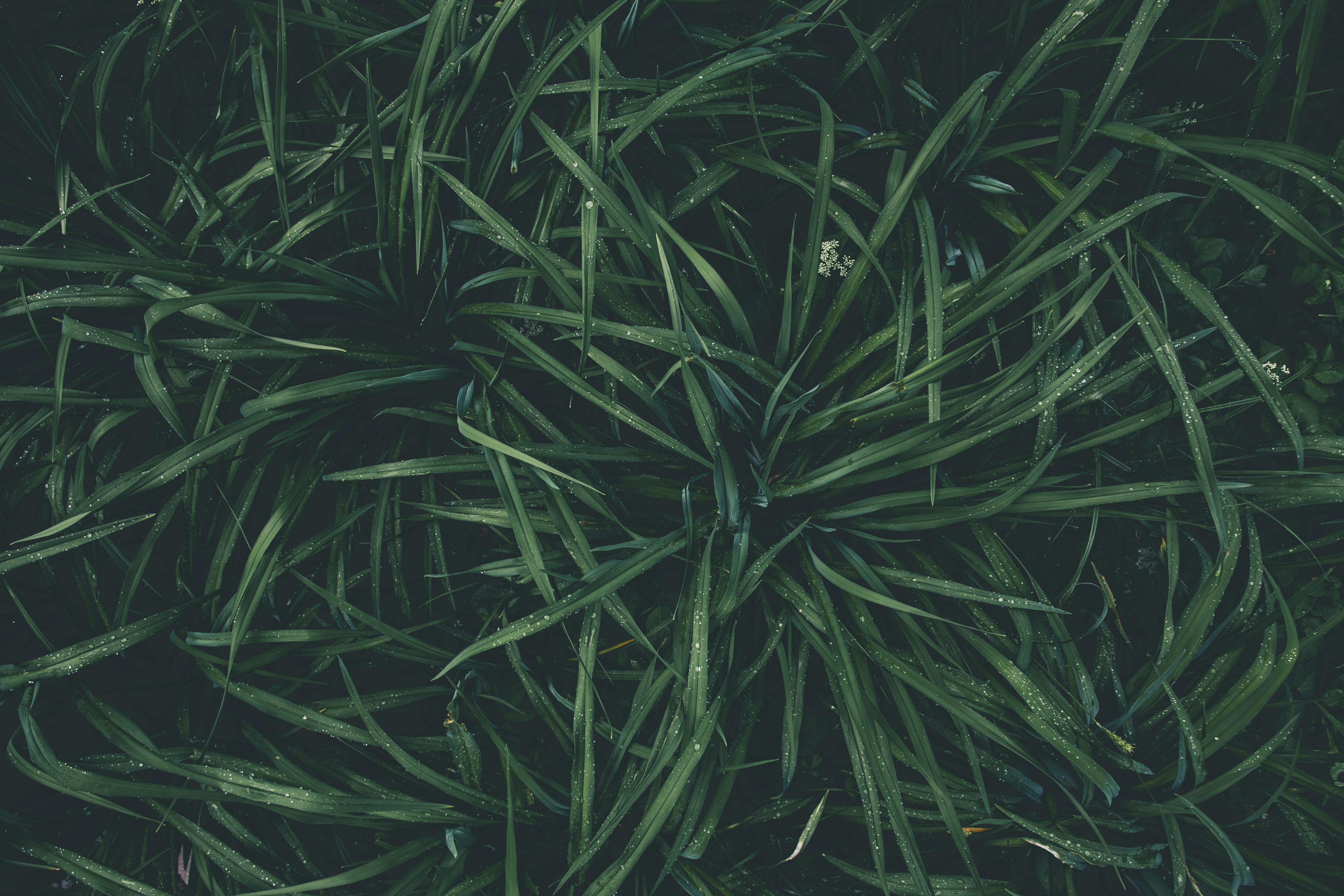 Top View Photography of Green Plant