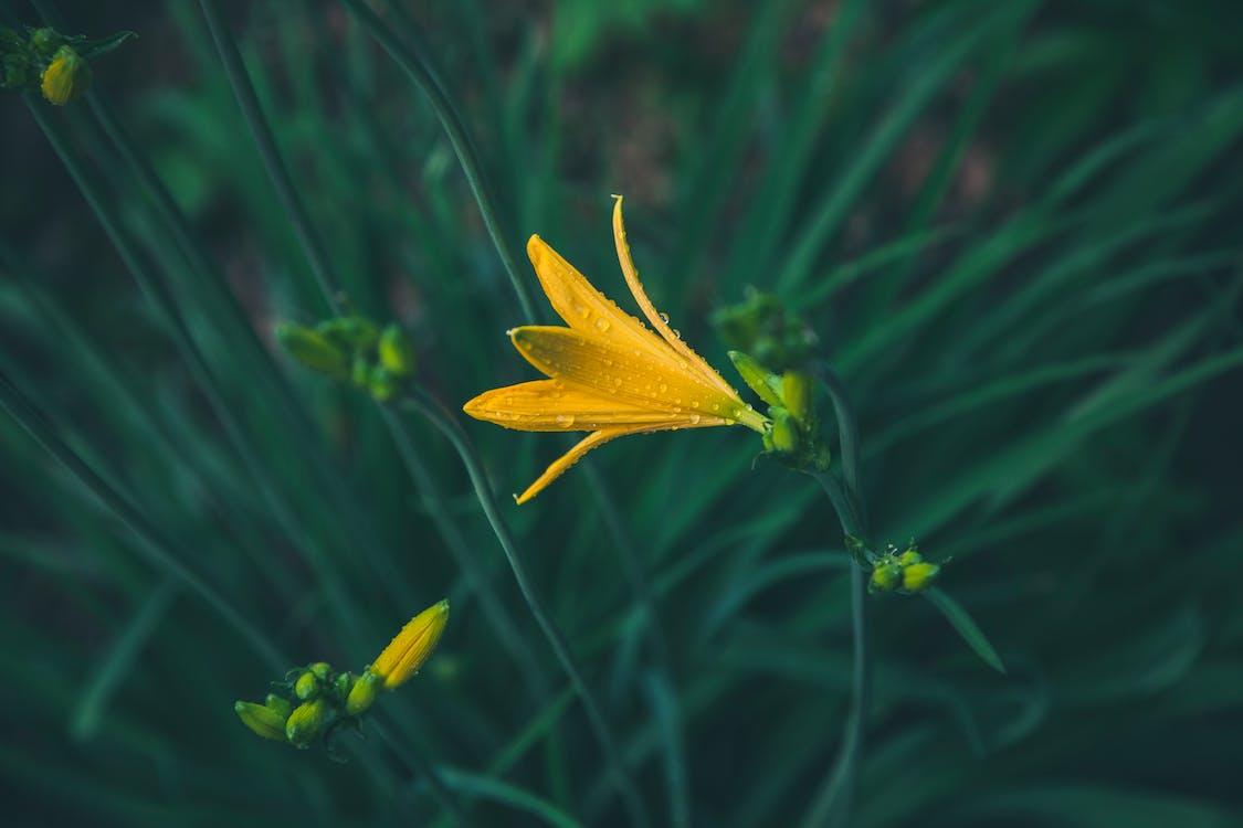 anlegg, blomst, blomsterblad
