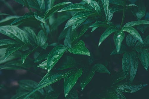 Základová fotografie zdarma na téma barva, bujný, déšť, dešťové kapky