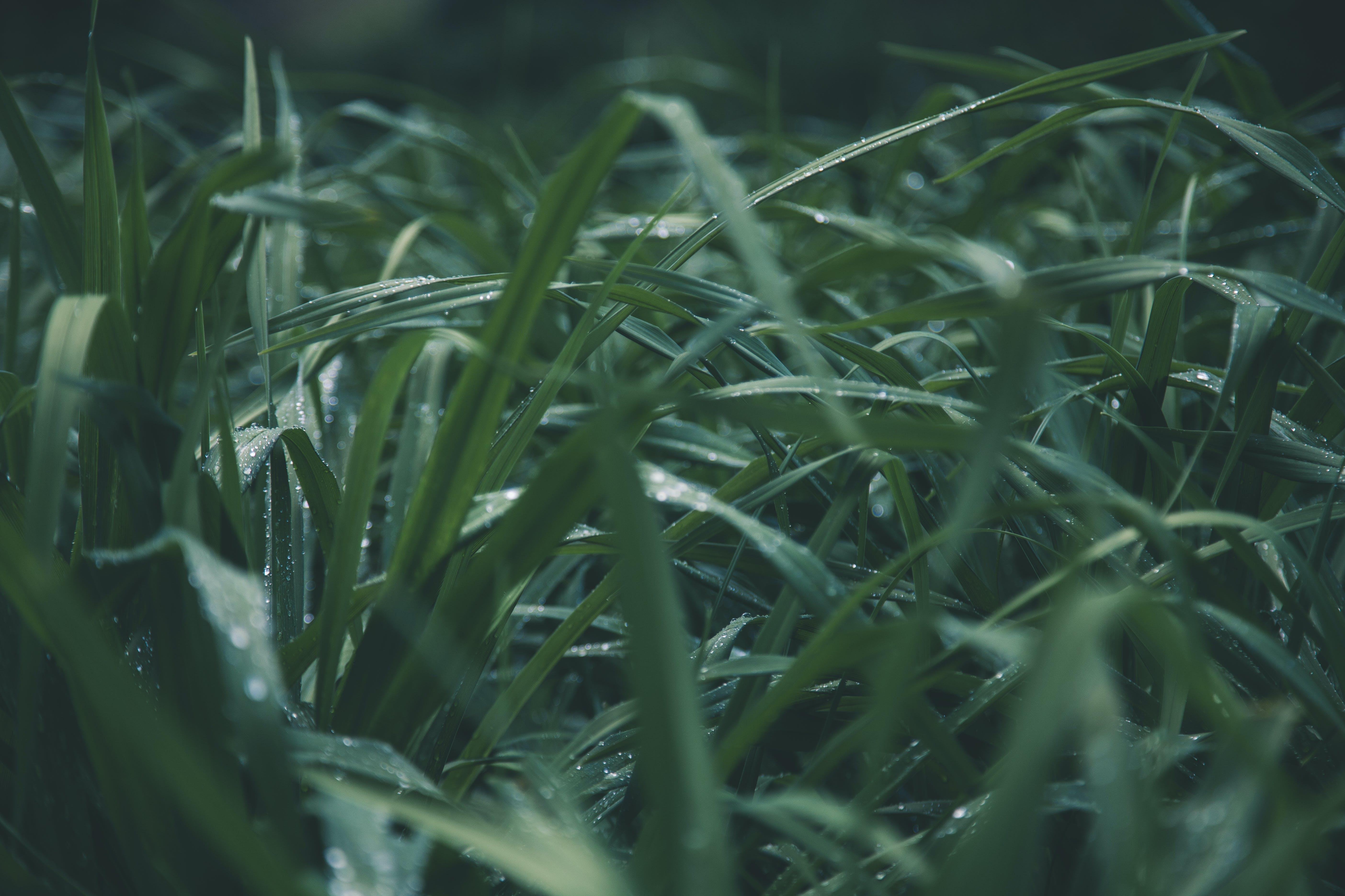 Shallow Focus Photo of Green Grass