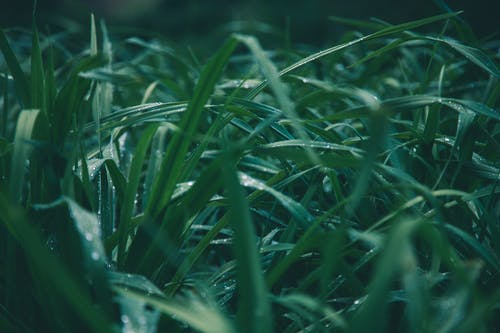 Shallow Focus Photo of Green Grass
