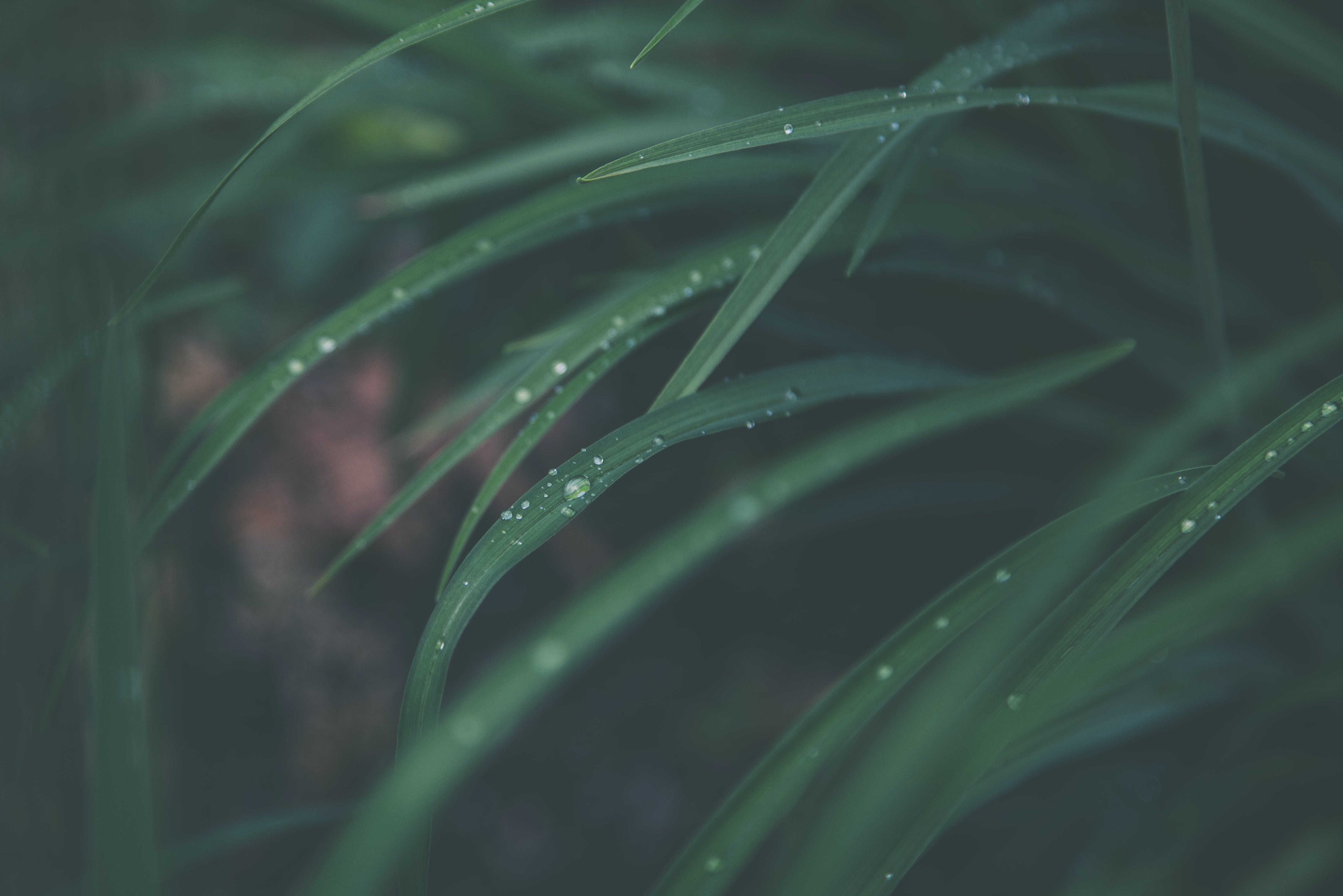 Macro Photography of Green Linear Leaf