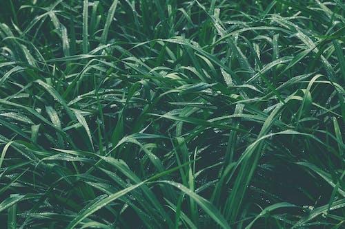 Foto d'estoc gratuïta de aigua, bri d'herba, camp, concentrar-se
