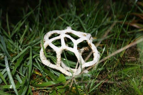 エイリアン, フラッシュ, 夜, 真菌の無料の写真素材