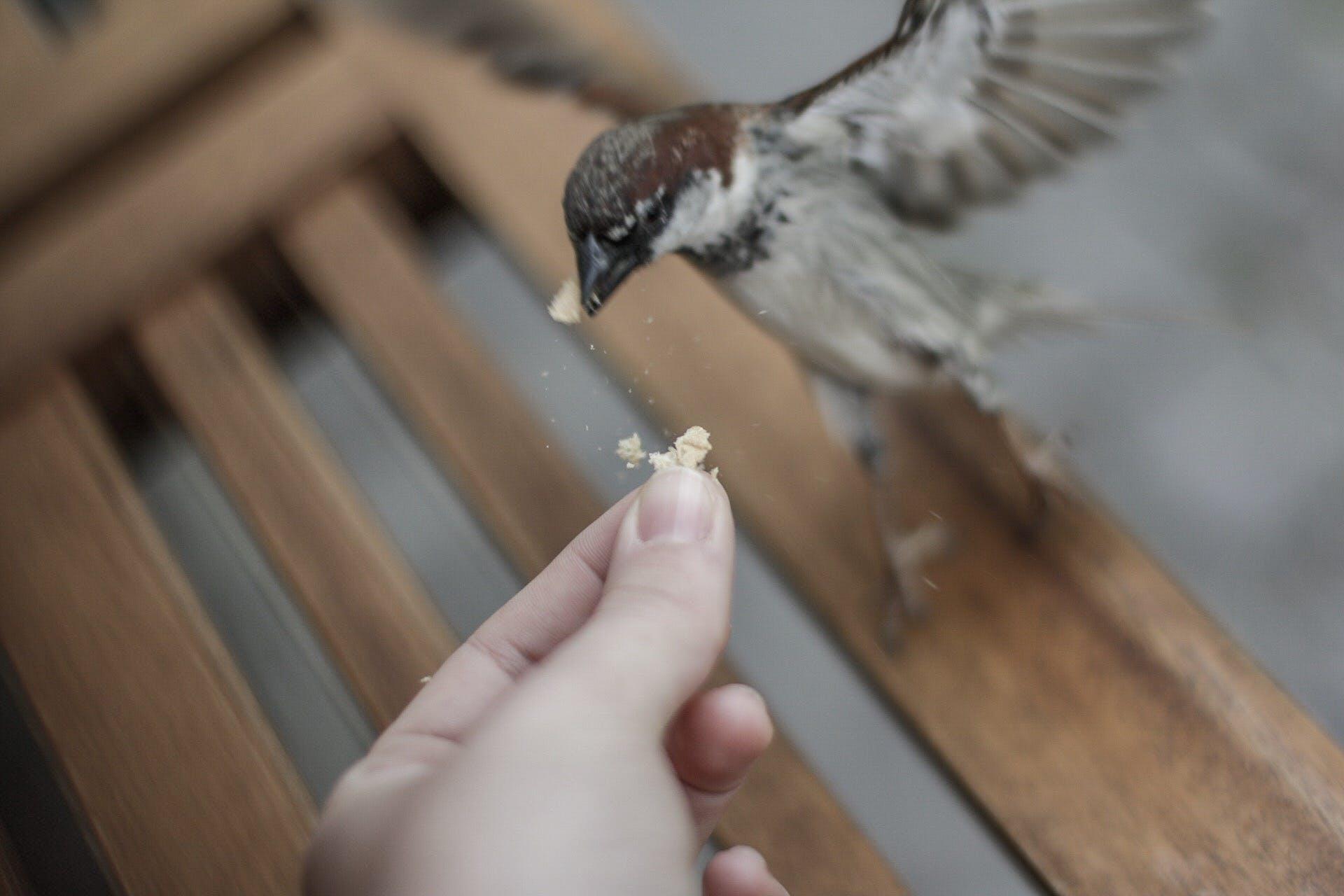 Free stock photo of #bird, #birds, animal, feeding