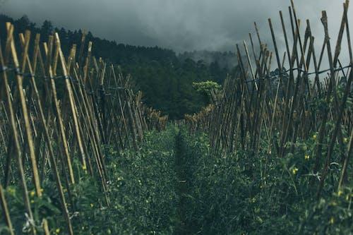 Gray Nimbus Clouds over Farm Field