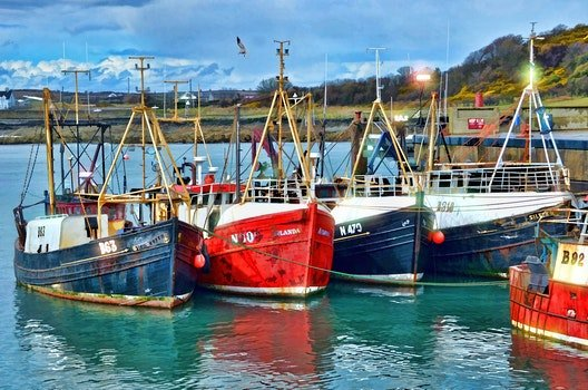 Red Blue and White Fishing Boats on Dock during Daytime
