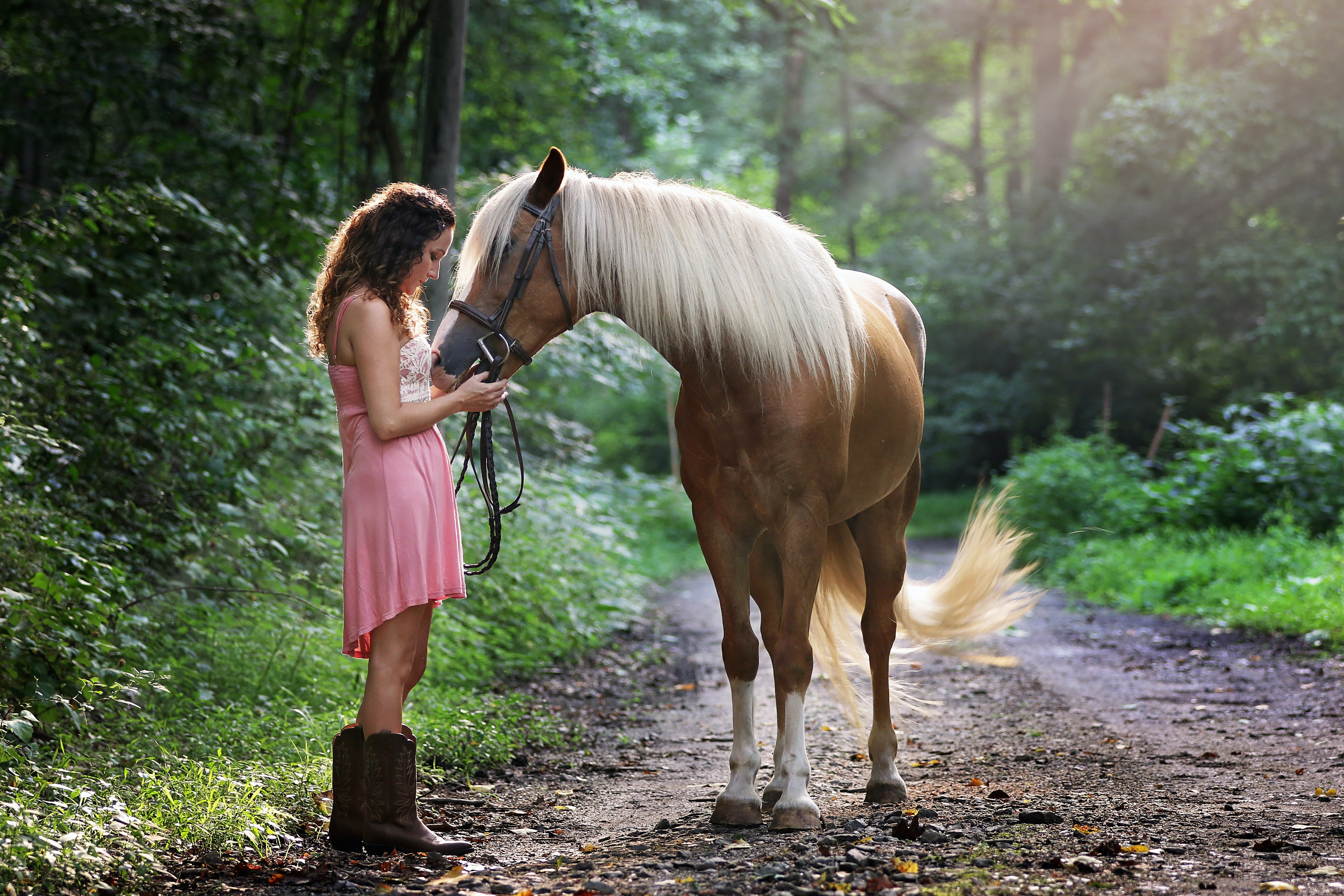 You Can Use All Horse Images Commercially Because They Are Free Stock Photos And Licensed Under The CC0 License To Download