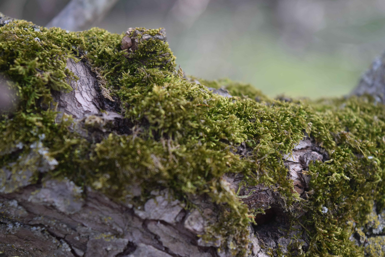 Green Moss Photo