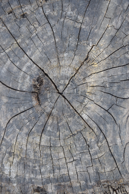 Gratis lagerfoto af gammelt træ, kævle, log ringe, træ