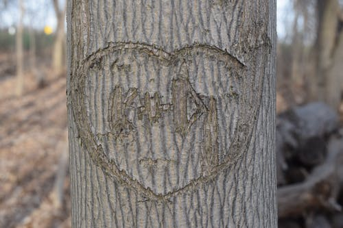Free stock photo of carved wood, love heart, maple, names carved in a tree