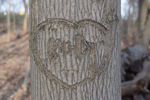 名字刻在樹上, 愛心, 木雕, 楓葉 的 免費圖庫相片