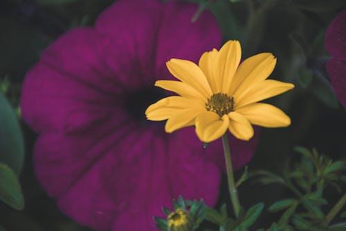 Foto stok gratis berkembang, bunga, flora, kelopak bunga