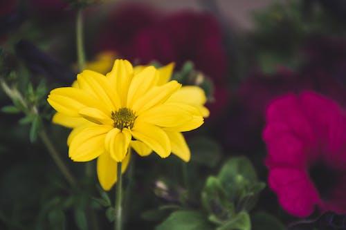黄色い花の浅い焦点写真