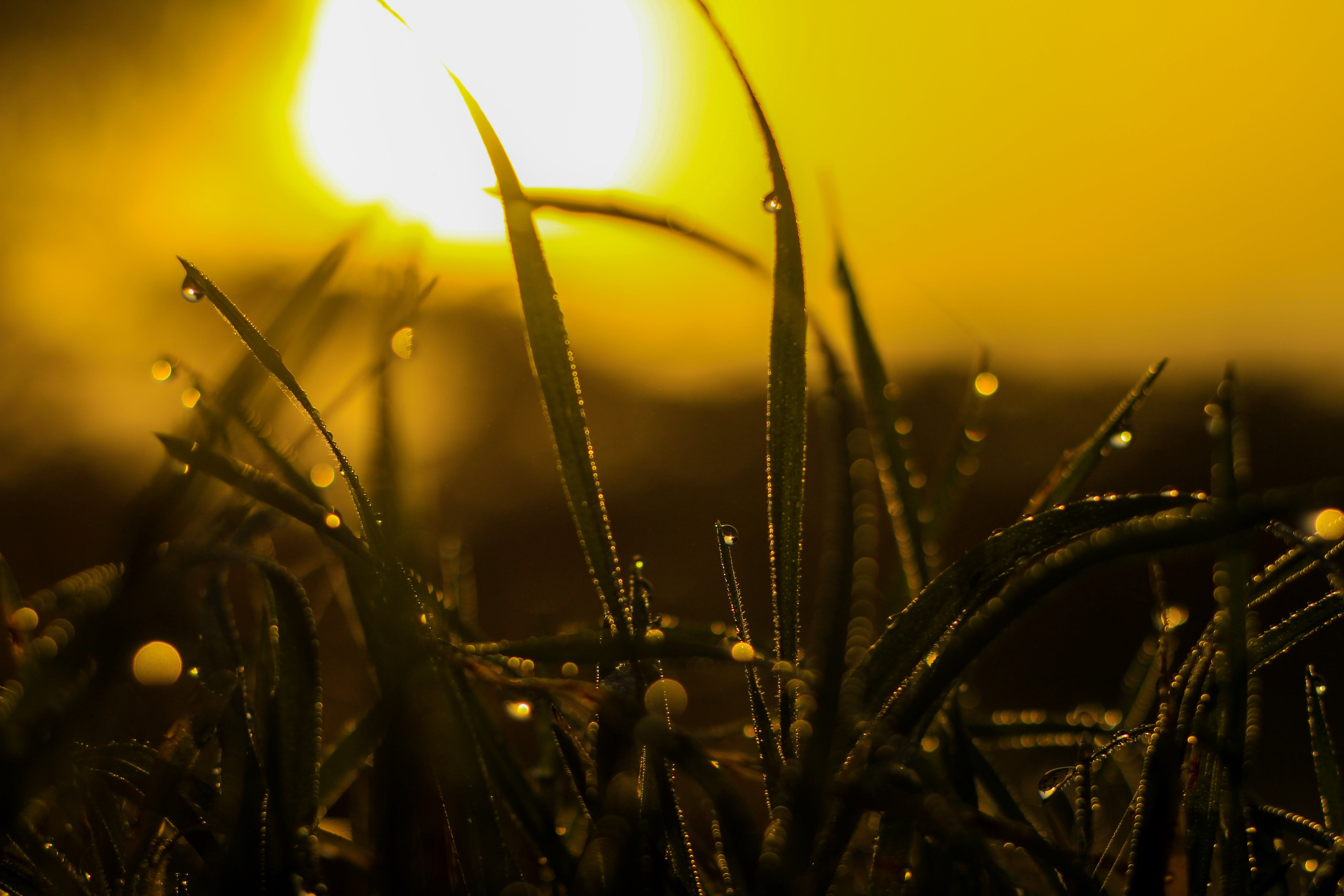 Macro Photography of Grass With Water Dew