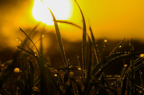 乾草地, 光, 夏天, 太陽 的 免費圖庫相片