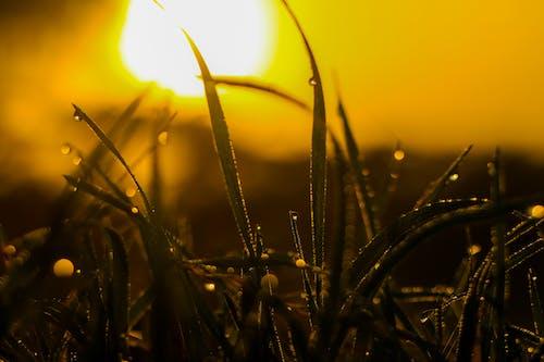 Kostenloses Stock Foto zu blume, dämmerung, feld, flora