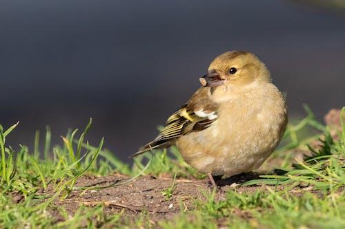 #wildlife, #羽毛, #鳥, #麻雀 的 免費圖庫相片