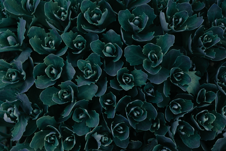 Δωρεάν στοκ φωτογραφιών με ανάπτυξη, άνθος, ανοιξιάτικα λουλούδια, ατμοσφαιρικό βράδυ