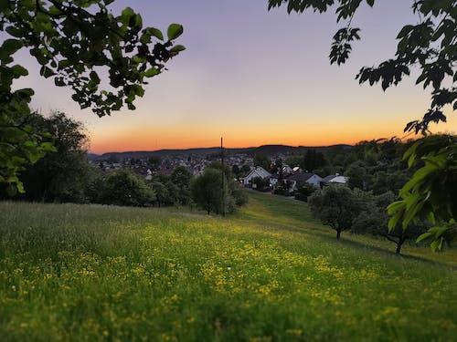 Darmowe zdjęcie z galerii z krajobraz, kwiaty, natura, wieczór