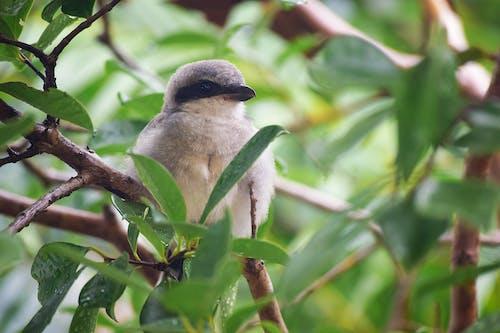 Fotos de stock gratuitas de arboles, fauna, rama