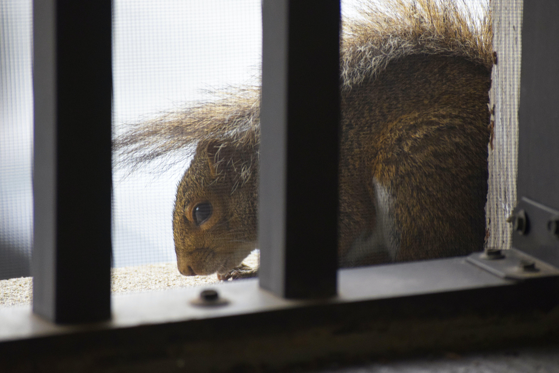 Free stock photo of animal, balcony, metal, patio
