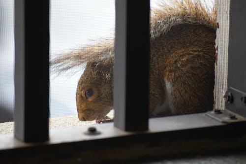 balkon, hayvan, metal, sincap içeren Ücretsiz stok fotoğraf