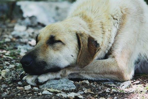 Gratis lagerfoto af close-up, dyr, dyrefotografering, hund