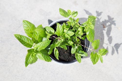修剪花草, 園林植物, 園藝 的 免费素材图片