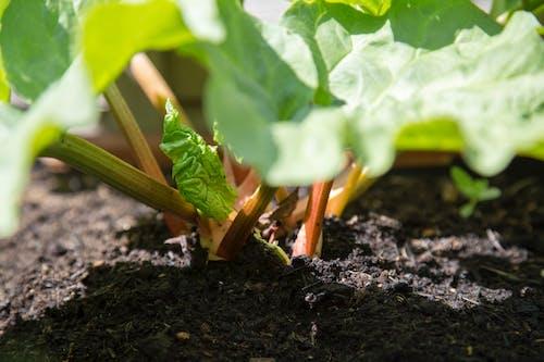 修剪花草, 可以吃的, 叶茎 的 免费素材图片