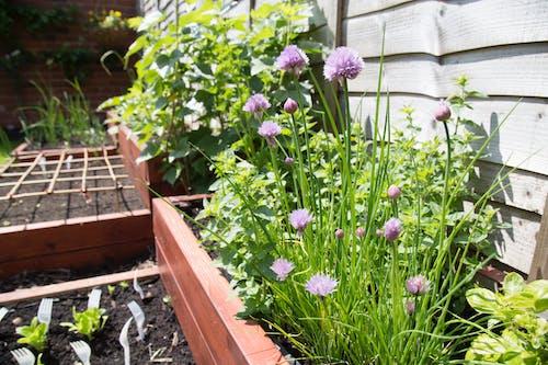 修剪花草, 園藝, 整理花園 的 免费素材图片