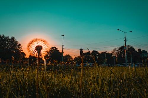 Ingyenes stockfotó farm, fény, fű, gabona témában