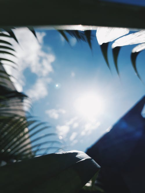 Free stock photo of blue sky, sunshine