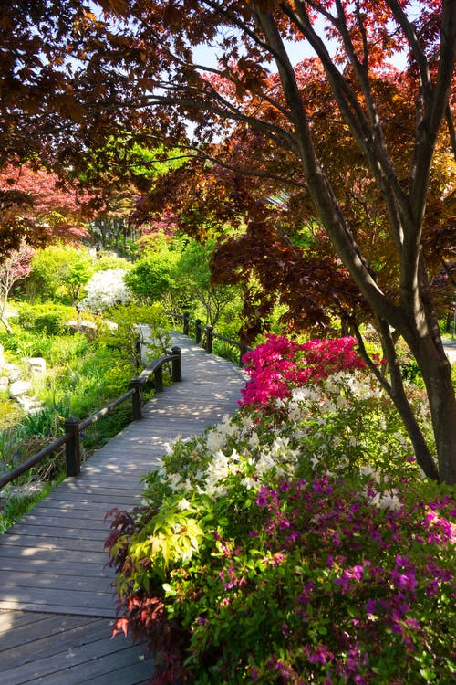 Foto d'estoc gratuïta de arbre, arbres, carretera, flor rosa